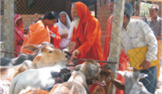 Movement for Preservation of Cows of Indian species